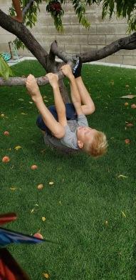 good climbing peach tree