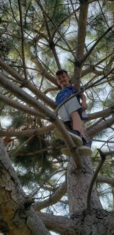 Tyler in the tree!