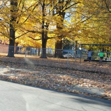 sanford trees