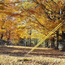 yellow trees at Sanford